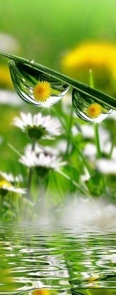 flower reflection in dew drops