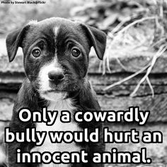 I hate all animal abusers