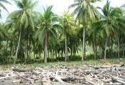 Tropenpflanzen Plants, Jungles, Woodland Forest, History, Plant, Planets