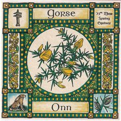 Also known as Ohn, Whin. Its golden flowers are associated with the Spring Equinox. Wood and blooms are burned for protection and preparation for conflict of any sort.