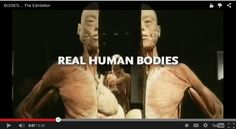 Get up close and personal with real human bodies the learn science, human anatomy, physics, and biology.