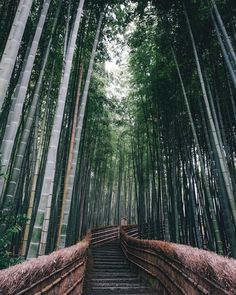 The magic of Japan in 15 beautiful photos by Takashi Yasui