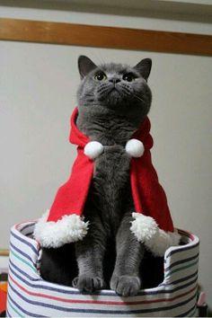 #christmas #cat