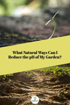Using organic materials like well-decomposed compost, compost tea, elemental garden sulfur, mulch, coffee grounds, and sphagnum peat moss in your garden can help lower the pH of the soil naturally. // soil for vegetable garden // vegetable garden soil // organic soil // garden soil // healthy soil // soil ph // #soil amendment #types of soil #soil types #soil preparation Vegetable Garden Soil, Acid Loving Plants, Organic Mulch, Soil Texture, Compost Tea, Soil Ph, Sandy Soil, Peat Moss, Gardening Hacks