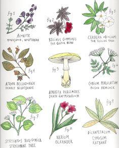 Run Lori Run!: A Very Short List of Very Poisonous Plants