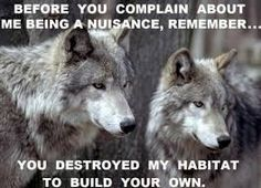 Image result for wolf quotes about strength