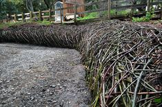 File:Living Willow and Elderberry Retaining Wall Mary O'Brien Adobe Creek Redwood Grove Adobe, Living Willow, Santa Clara County, Erosion Control, Willow Branches, Palm Coast, Garden Architecture, Outdoor Art, Lsu