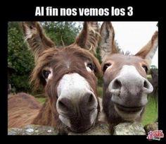 frases con fotos graciosas de animales