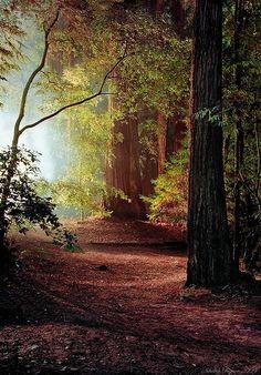 djferreira224: Redwoods ~ Nikolay Chigirev
