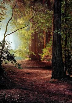 Redwoods ~ Nikolay Chigirev. Looks like a place that would be in a dream...absolutely beautiful photo