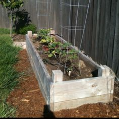 One of our raised beds
