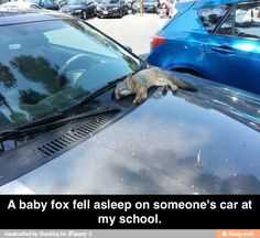 that's it. i'm quitting this stupid place & going to the school with car foxes.