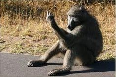 Baboon vs Hyena Fight comparison, who will win? Monkey Pictures, Funny Pictures, African Jokes, Funny Animals, Cute Animals, Haha, Cute Monkey, Kruger National Park, African Animals