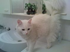 Pupi in bathroom