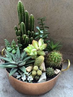 Succulent and cactus bowl // Shop 100% Bamboo Eco-friendly Bedding & Apparel www.yohome.com.au xx