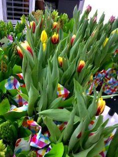 Sarah's tulips