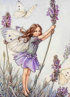 The Lavender Fairy by Cecile Mary Barker  album cover
