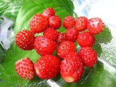 Dulceata de fragi Canning Pickles, Raspberry, Strawberry, Jam Recipes, Sweets, Fruit, Sauces, Gem, Food