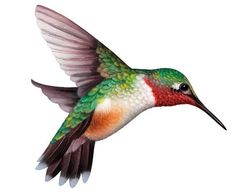 hummingbirds clipart - Google Search