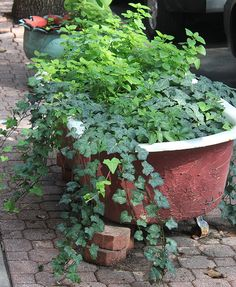 204 best Creative Garden Container Ideas images on Pinterest ...