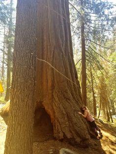 California Tree Huggers Unite! Sequoia National Park, National Parks, Giant Sequoia Trees, Entrance, California, Explore, Beautiful, Entryway, Door Entry