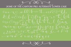 Cantoni Pro Hand Lettered Font by DebiSementelli on @creativemarket