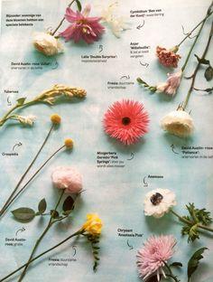 Speciale betekenis van bloemen (Margriet07|15)