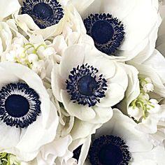 Anemones. What my bridesmaid bouquets were, but black centers.