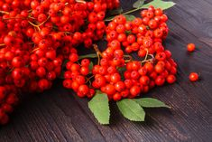 10 Amazing Health Benefits of Rowan Berries For Your Health, Health And Wellness, Benefits Of Berries, Micro Nutrients, Bowl Of Cereal, Kinds Of Fruits, Jelly Recipes, Recipe Sites, Rowan