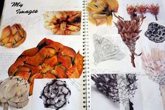 Sketchbook work showing off my own photography skills as well as workfrom these images in various media, from acryllic to pencil shading as well as biro and pastel work. Dimensions: Double page spread in skecthbook A Level Art Sketchbook, Sketchbook Layout, Textiles Sketchbook, Sketchbook Inspiration, Sketchbook Ideas, Fashion Sketchbook, Design Inspiration, Natural Forms Gcse, Natural Form Art