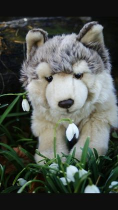 In my dreams. 250 dollar worth webkinz signature timber wolf