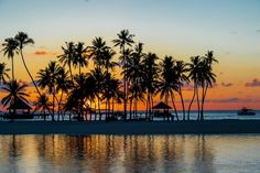 Gili Lankanfushi - Barefoot paradise in the Maldives Gili Lankanfushi, 5 Star Resorts, Maldives, Paradise, Asia, Boat, Sunset, Outdoor, The Maldives