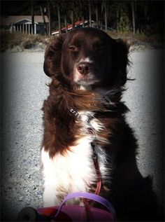 Pet Owner(s): Sam Price  Pet: Buster (Border Collie Mix)