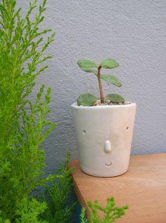 señor Verde cactus y gajito