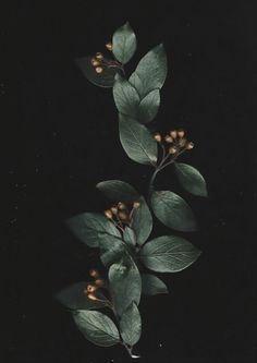 Flowers Wallpaper, Flower Phone Wallpaper, Galaxy Wallpaper, Nature Wallpaper, Iphone Wallpaper, Botanical Illustration, Bunt, Flower Art, Planting Flowers