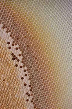 M Yousuf Tushar | Honeycomb