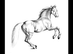 How To draw Horse - YouTube