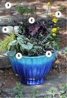 New England container gardens. This one includes 1. bugbane (cimicifuga 'brunette'), 2. coral bells (heuchera 'palace purple'), 3. marsh marigold (caltha), 4. japanese painted fern, 5. brunnera 'jack frost,' 6. variegated japanese forest grass (hakonechloa marca 'aureola'). Shade to partial sun.