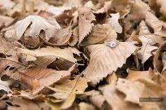 Tacori ring the leaves at Kildonan Park Tacori Rings, Engagement Photography, Leaves, Romantic, Park, Flowers, Parks, Romance Movies, Royal Icing Flowers