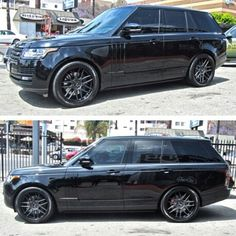 Blackish rover