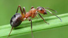 Jak se zbavit mravenců? Tady je několik účinných tipů - Žena.cz - magazín pro ženy Spirit Animal Totem, Animal Spirit Guides, Animal Totems, Ant Species, Termite Pest Control, Get Rid Of Ants, Wow Facts, Amazing Facts, Mind Blowing Facts