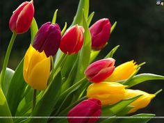 """Few things scream """"spring"""" as much as tulips."""