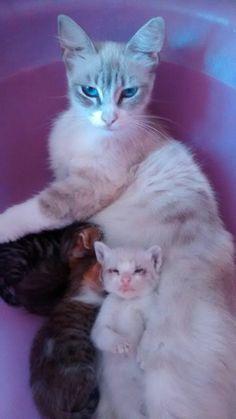 Luna y sus gatitos