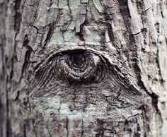 The eye in the tree