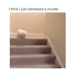 Funniest Animal Memes Of The Day That Are Extremely Hilarious Pics) - Awed! Funny Animal Memes, Dog Memes, Funny Animal Pictures, Cute Funny Animals, Cute Baby Animals, Funny Cute, Best Funny Pictures, Funny Dogs, Animals And Pets
