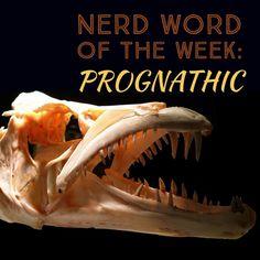 Free Image on Pixabay - Skull, Predator, Teeth, Bones, Fish Free Stock Photos, Free Photos, Largest Sea Creature, Words For Writers, Origin Of Species, Small Ponds, Creepy Halloween, Big Fish, Sea Creatures