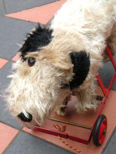 Chiltern Dog on wheels