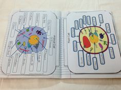 Compare Animal Cells and Plant Cells - Interactive Flip Book for Journals - Advanced and Easy Versions