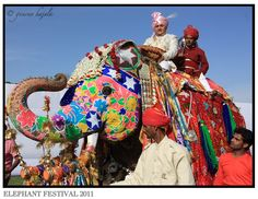 Elephant Festival at Jaipur. They have a festival?!?! Of elephants?!?! I'm there.