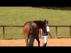 Horses for sale/Cavalos à venda